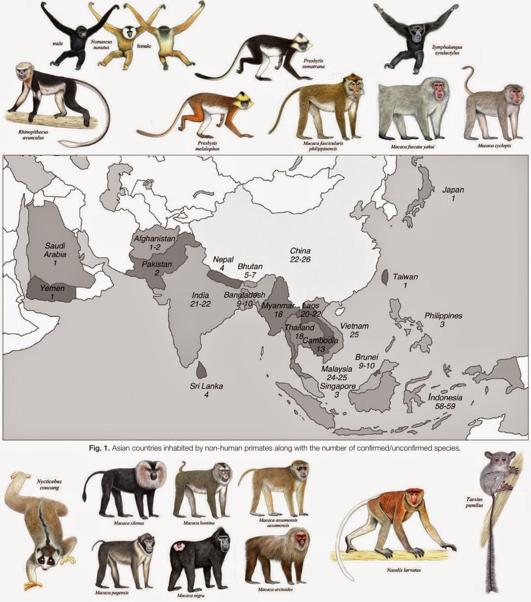 Species New to Science: [Primate • 2014] Asian Primates ...