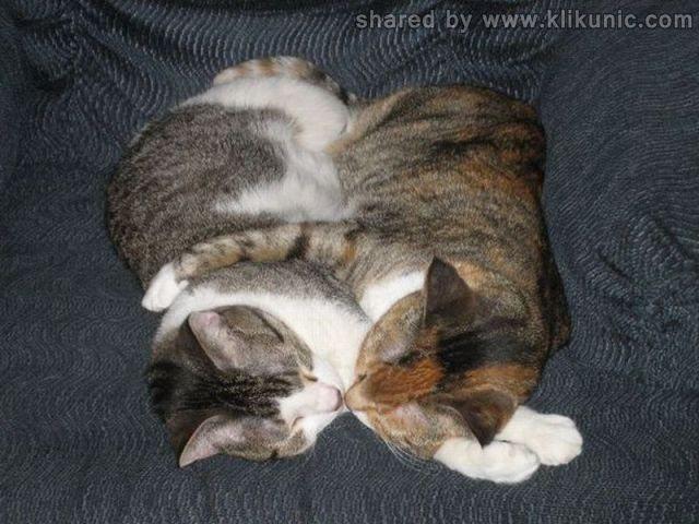 http://4.bp.blogspot.com/-AjeR-cfm-KU/TXhNi-OG3UI/AAAAAAAAQi4/m0z2V2cS7GY/s1600/these_funny_animals_635_640_03.jpg