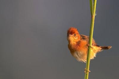 Hình ảnh những chú chim đẹp nhất