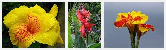 manfaat bunga tasbih