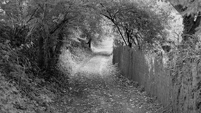Weg, eingerahmt von Mauer und Büschen