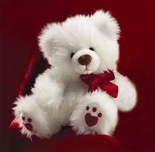 teddy beear