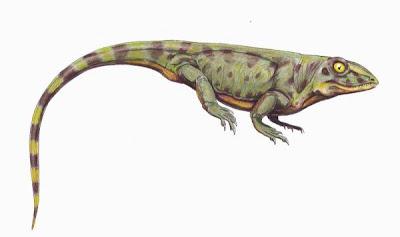 reptiles de hace 300 millones de años Haptodus