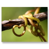 love vine postcard--Zazzle.com