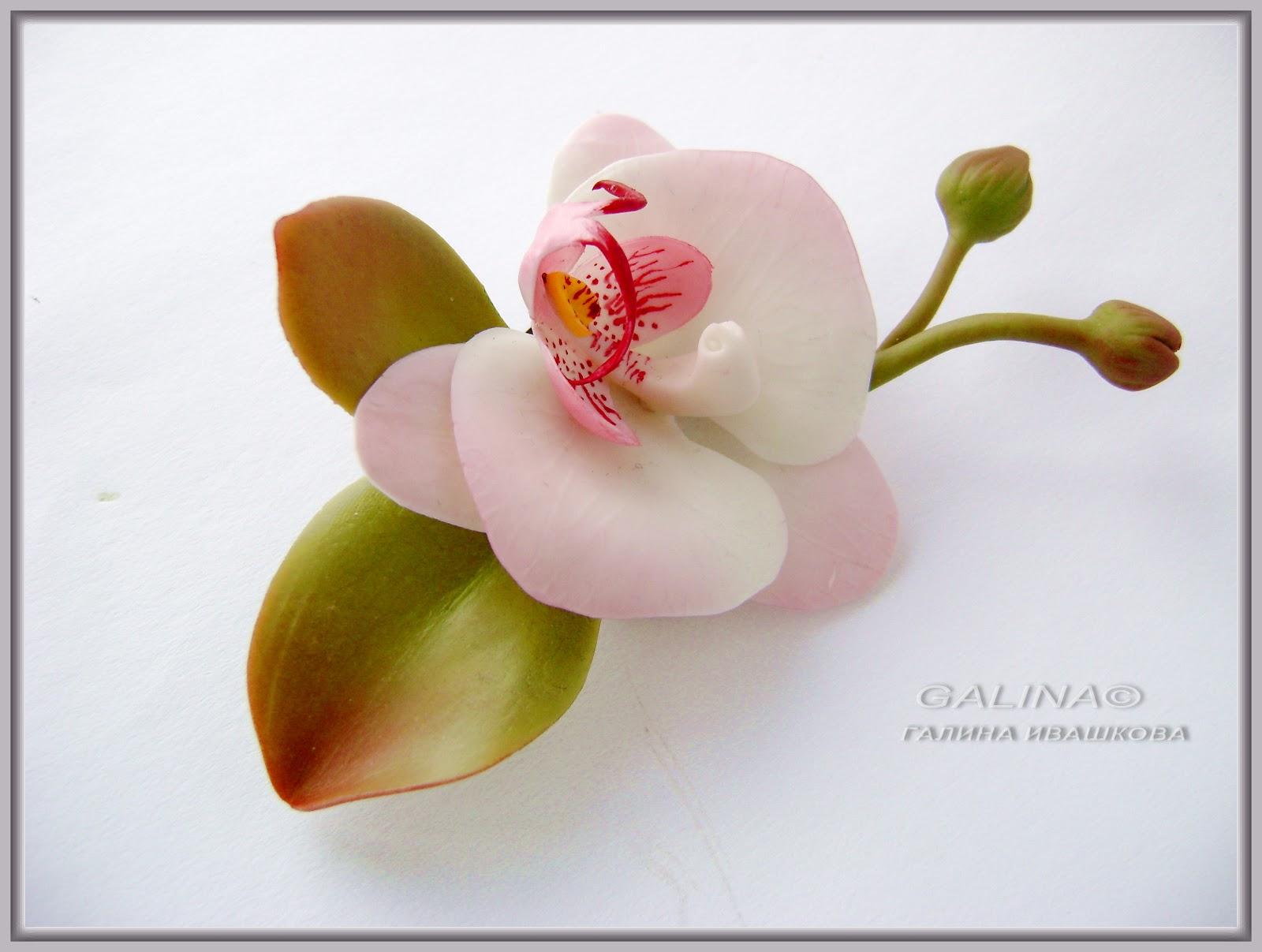 Цветы из полимерной глины и холодного фарфора своими руками