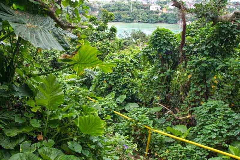 ocean view, handrail, jungle path