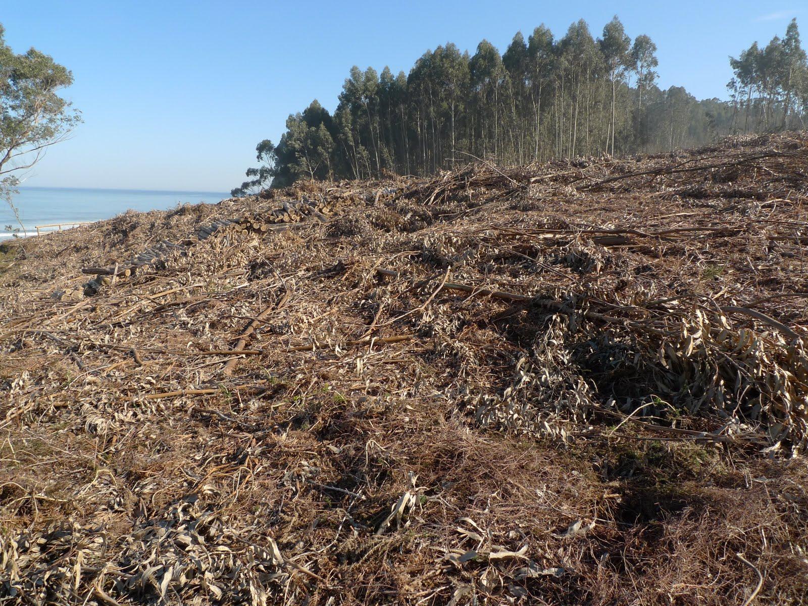 Domodos restricciones a que deben someterse las - Informacion sobre el eucalipto ...