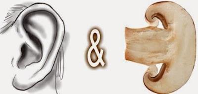 9 Bahan Makanan Yang Serupa Dengan Organ Tubuh