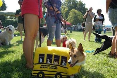Fantasia para Cachorro
