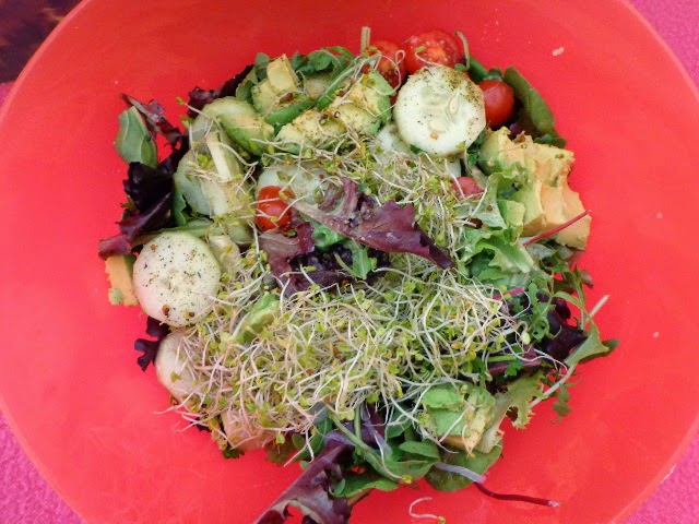 raw vegan spring sprout salad