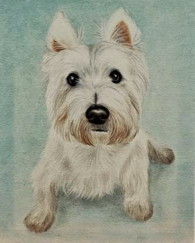 Westie Portrait of Benson the West highland Terrier