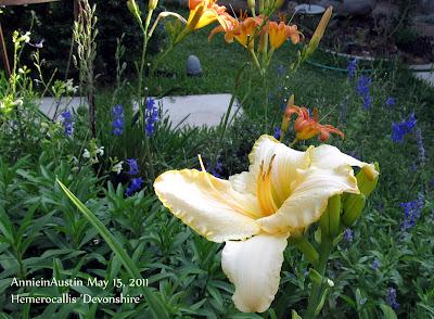 Annieinaustin,Devonshire daylily