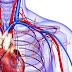 Circulatory system problems
