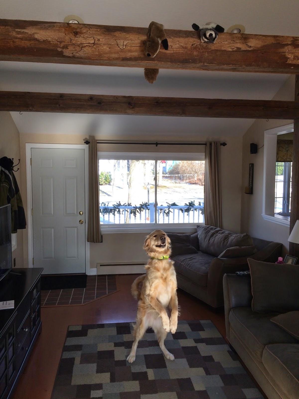 mischievous tricks on dog