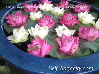 sunflower lotus flower at Jim Thompson's house in Bangkok