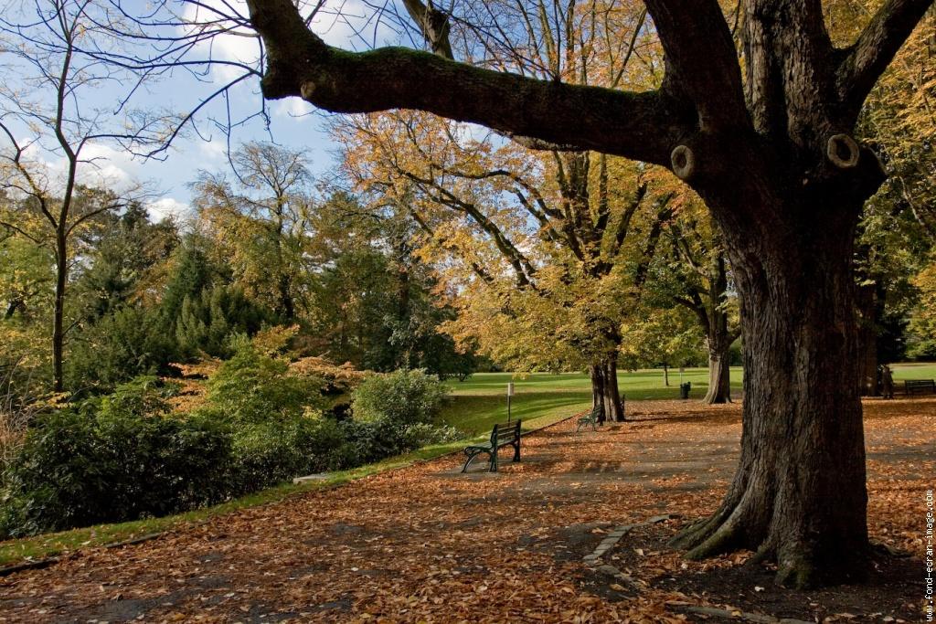 Le Parc Barbieux dit le Beau Jardin: Bonus