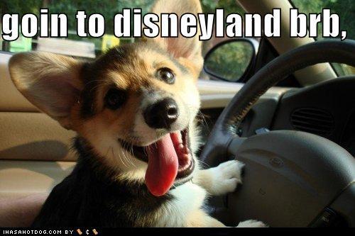 Funny Disneyland Meme : Little lady big apple post holiday cuteness