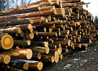 timber imports