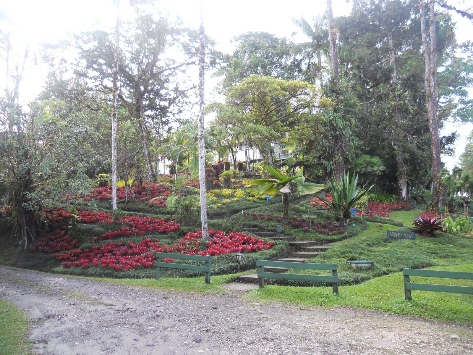 Anna 39 S Costa Rican Adventure Wonders Of The Botanical Garden