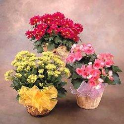 La arote de tule arranjos de folhas e flores for Plantas baratas