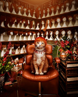 Gatito by Jonathan May | Haz clic para ampliar
