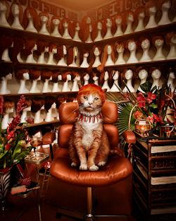 Gatito by Jonathan May | Haz clic para ampliar