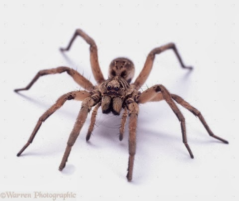 arachnophobia research paper Essays & papers arachnophobia essay - paper example arachnophobia essay - arachnophobia essay example arachnophobia arachnophobia is a scientific term.