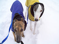 Girly Girl and Blue greyhounds in snow