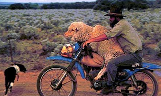 funny picture sheep on the motor
