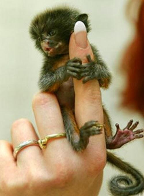 tinny animals on fingers 3