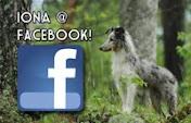 Iona @ Facebook