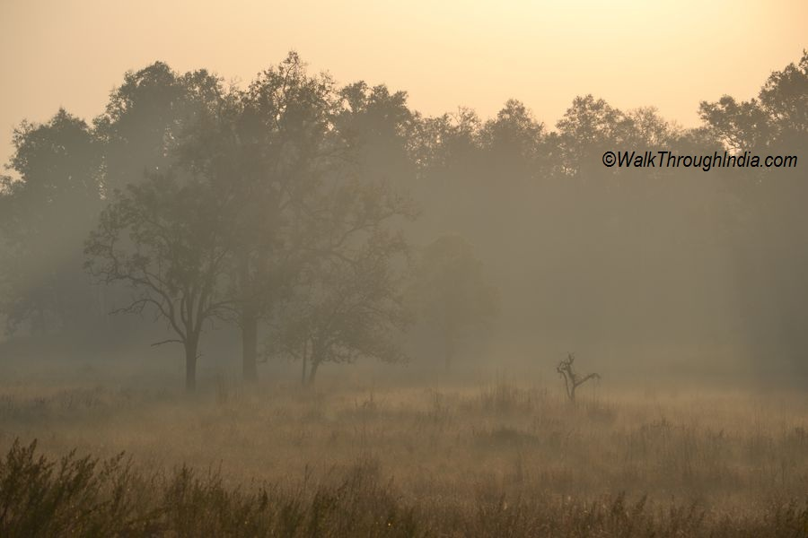 Meadows of Kanha - Jabalpur