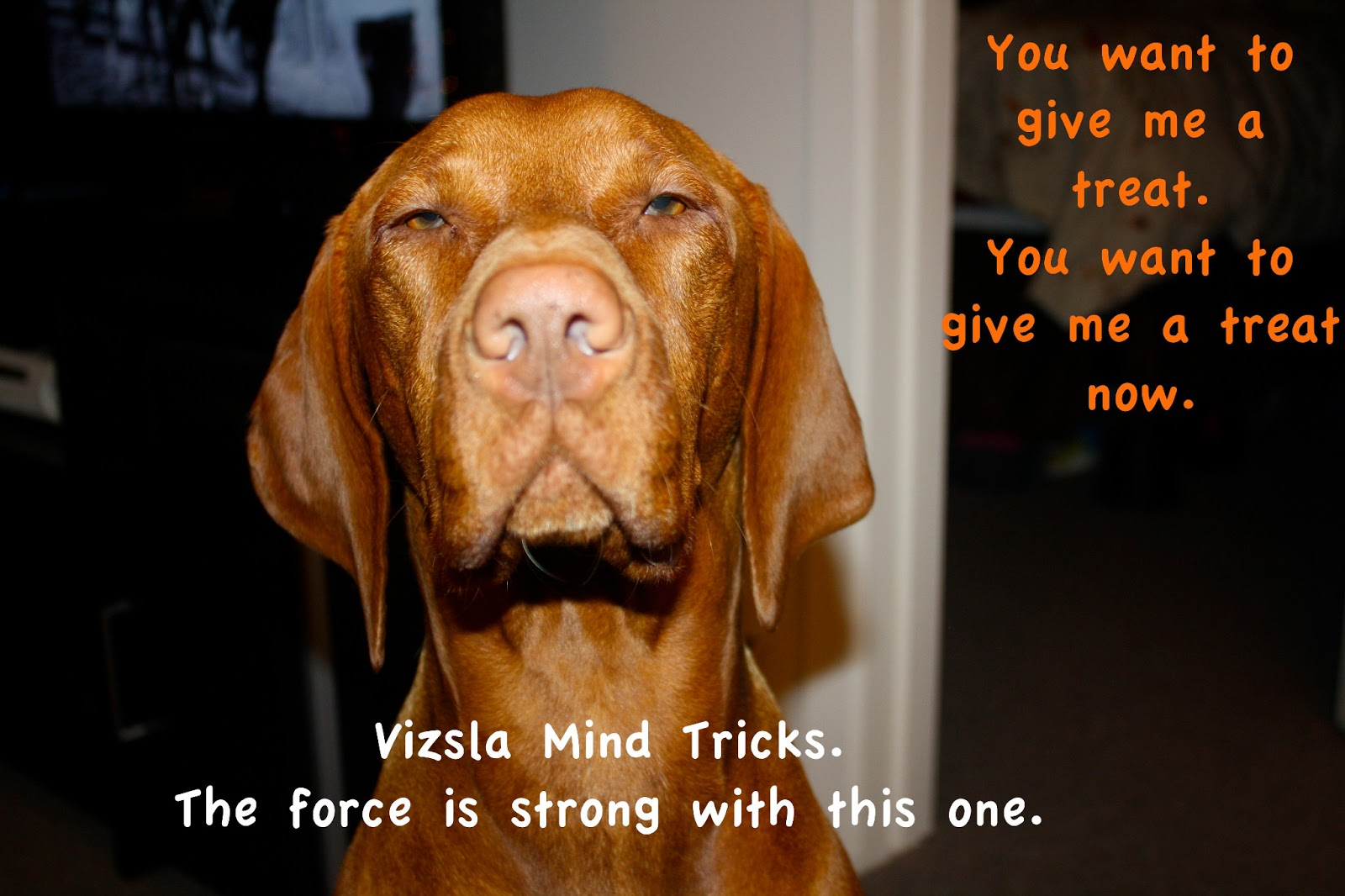 Vizsla Quotes Ok so we have a lot of these