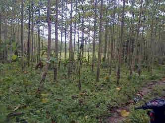 Dijual murah tanah kosong 6,3 H do dalam kota Rangkas Bitung