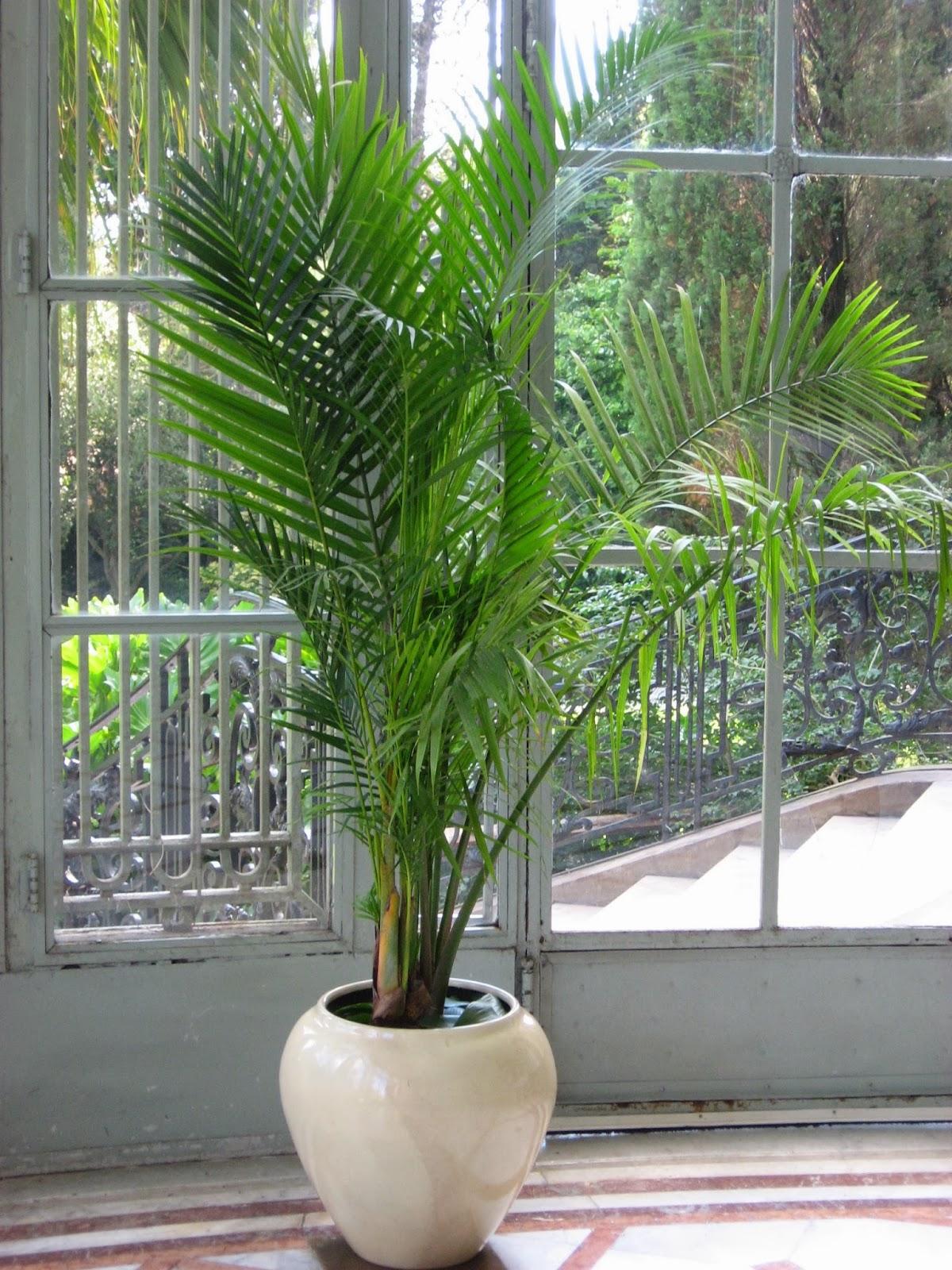 Plantas y macetas for Plantas para oficina