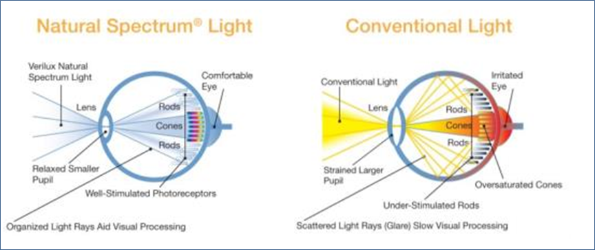 Natural Spectrum Light vs. Conventional Light