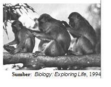 Interaksi  antarmakhluk  hidup. Interaksi antara monyet yang disebut social grooming  ini dipelajari dalam Biologi  dan cabangnya