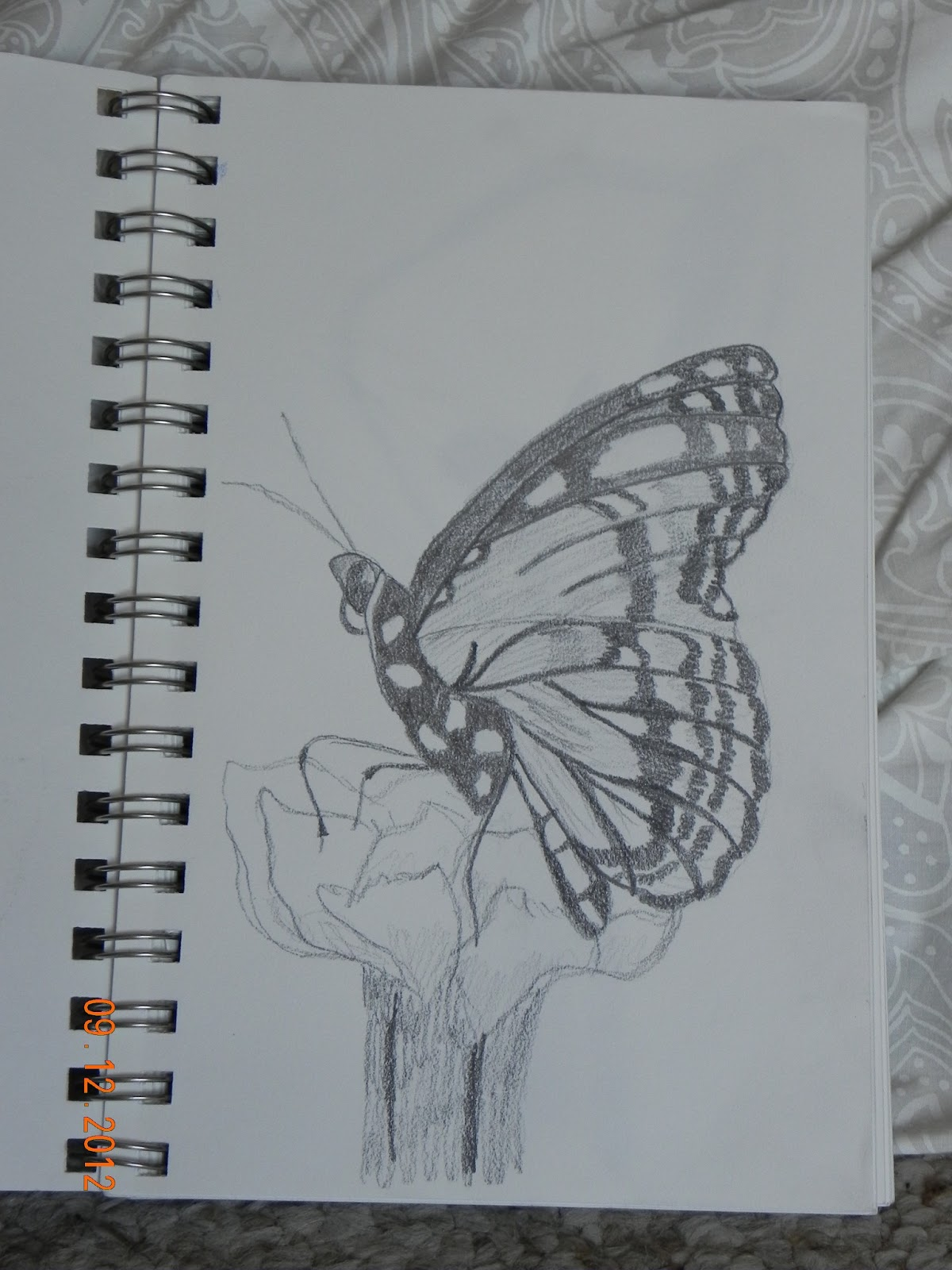 Pencil drawing monarch butterfly