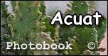 Acuat Photobook