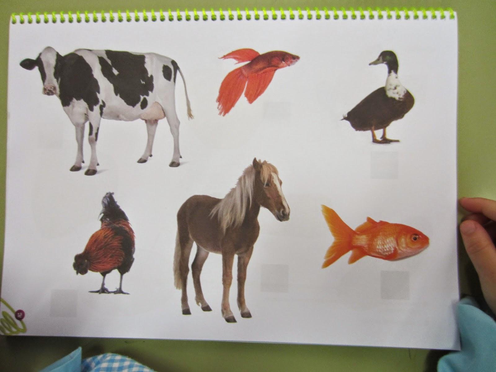 imagenes de animales con escamas - clasificacion de los animales vertebrados animalandia Sites