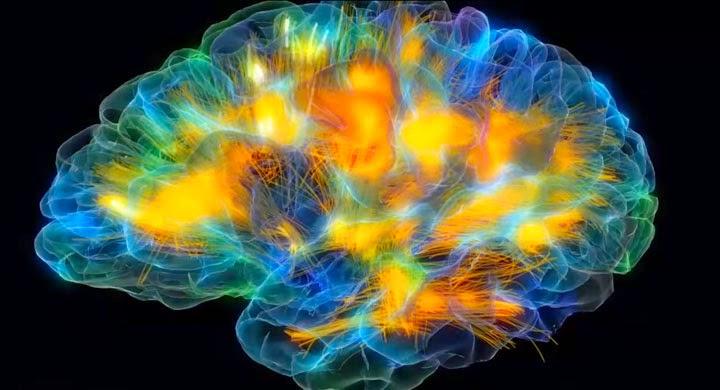نشاط الدماغ البشري