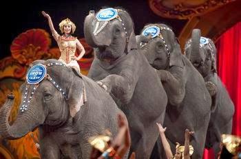 dresaj, educatie, elefant, succes, curaj
