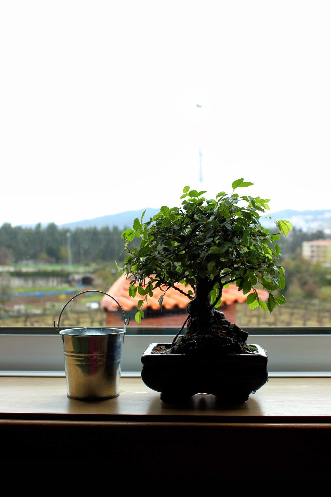 bonsai by edith tiempo Learn about the living art of bonsai we explain how to care, cultivate and maintain your bonsai tree with easy to understand and step-by-step guides.