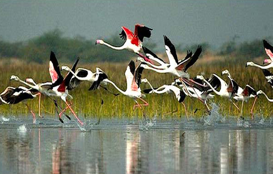 Cycle Safaris in the Keoladeo National Park