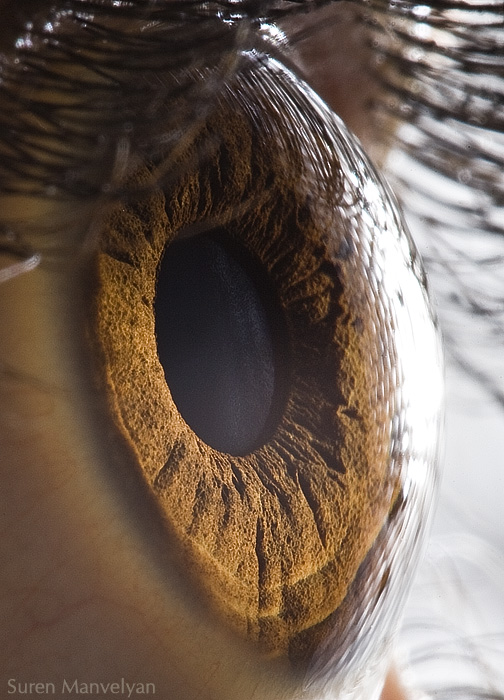 Indahnya Mata Dari Jarak Dekat !