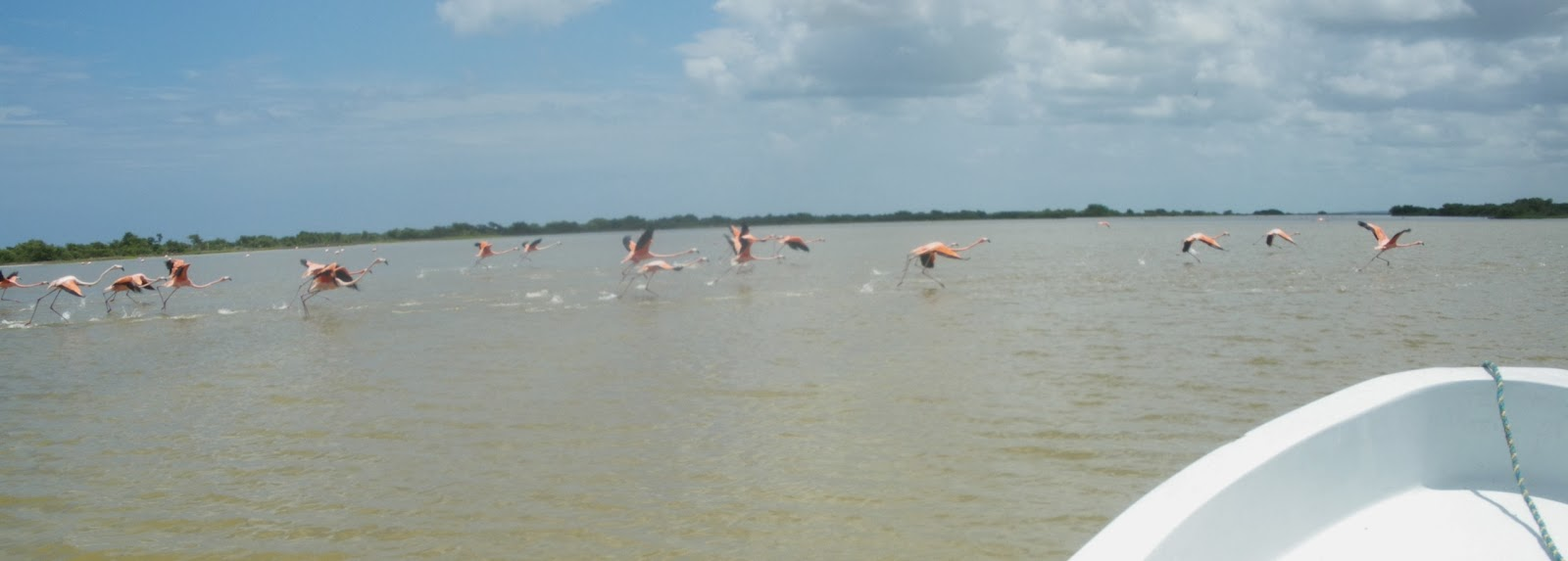 mexico rio lagartos yucatan excursion flamencos