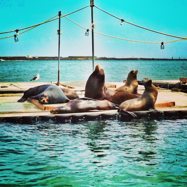 Sea Lions in San Diego Bay