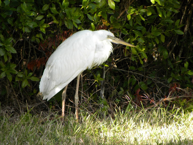 West Lake Everglades