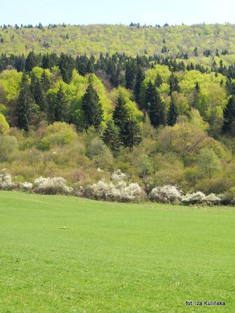 orawa , wiosna , kwiaty