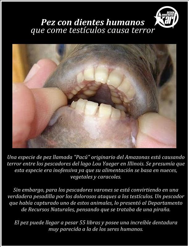 El mundo esta Tosta\'o: Sorprendente - Pez Con dientes Causa Terror..!!